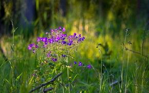 fiori, estate, natura