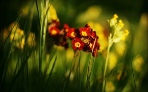 花卉, 夏天, 性质