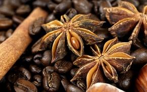 coffee, grain, anise, cinnamon, Spices