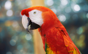 parrot, macaw, variegated, feathers, beak