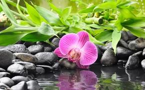 орхидея, цветок, камни, черные, бамбук, вода, отражение