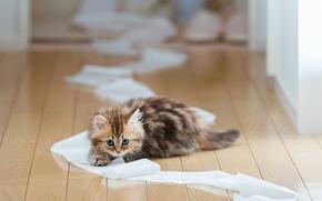 gato, gatinho, Banheiro, papel, andar, conselho