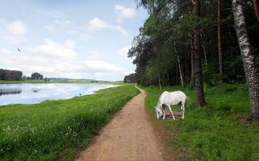 fiume, strada, cavallo, paesaggio