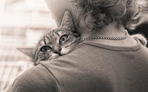 cat, view, shoulder, parting, embrace, sepia