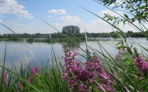 wybrzee, rzeka, Trawa, kwiaty