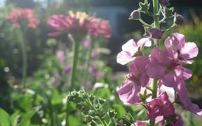 kwiaty, ogrd, lato, rano