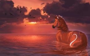 caballo, puesta del sol, agua, pintura, Aves, las nubes