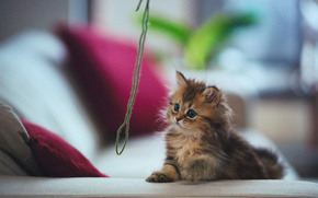 kitten, cat, thread, game, sofa, pillows