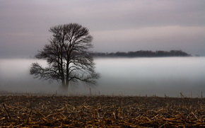 field, tree, fog, landscape