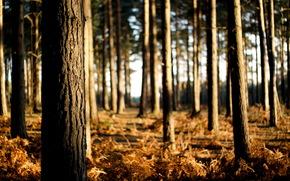 Trees, nature, light