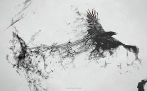 crow, Ворон, полет, дым, брызги, черное