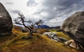 nature, landscape, tree, grass, stones