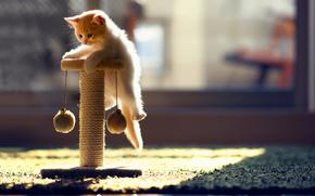 gattino, gatto, gioca, giocattolo, tappeto, sole