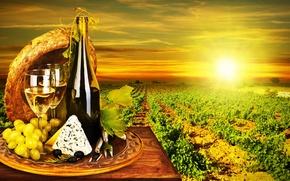 wine, White, glasses, grapes, bottle, cheese, Dor Blue, olives, vineyard, sun