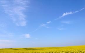 amarillo, campo, Flores, cielo