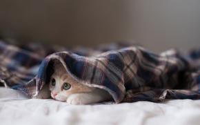 cat, kitten, hide and seek