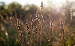 лето, трава, закат, поле