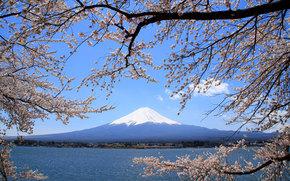 sakura, Japan, Fuji, mountain, volcano