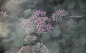 atwo, kwiaty, rano, mgieka