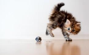gatto, gattino, giocattolo, spavento, Macro, palla