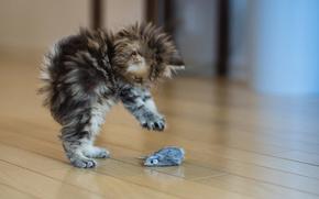 gattino, giocattolo del mouse, saltare, Cutie
