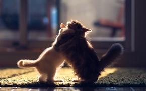 Gatinhos, gatinho, Gatos, par, lutar, andar, parquete, tapete, sol