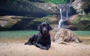 chien, cte, eau, cascade, Nature