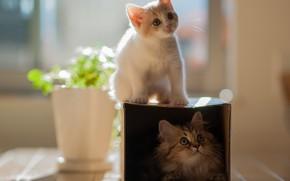 котенок, кошки, пара, двое, коробка, цветок, горшок, игра