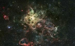 эмиссионная туманность, Тарантул, созвездие, Золотая Рыба