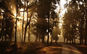 Morning, forest, margin, road, sun, light, rays, nature
