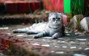 gatto, vista, sfondo