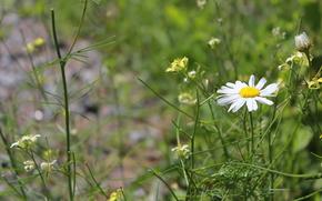 fiori, natura, paesaggi