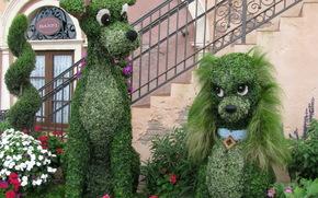 цветы, листья, собаки, лестница