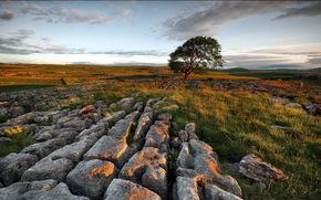 campo, pietre, albero, tramonto, paesaggio