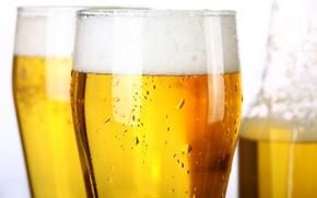 beer, light, goblet, glass, drops, foam, bottle