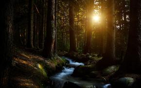 Лес, деревья, солнце, ручей