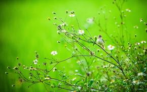 summer, bird, branch, nature