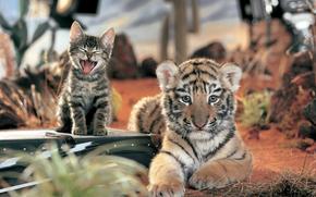 котенок, тигренок, полосатики