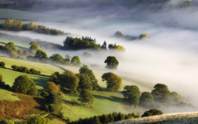 nebbia, alberi, valle, natura, mattina