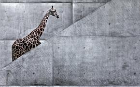 giraffe, Art, ladder, nature, animals, metro, giraffe is, Africa