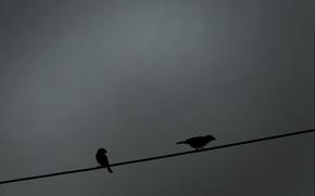 Птицы, воробей, воробьи, провод
