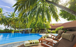 pool, hotel, Maldives, exterior, Sunbeds, Table, Palms, Trees