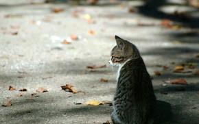 листья, котенок, осень, асфальт
