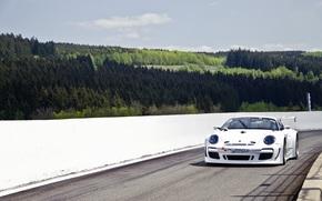 Porsche, white, sky, ate, pine, porsche