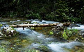 лес, река, вода, камни, ветки, бревно