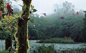 rod frederick, forest, river, Parrots, leopard
