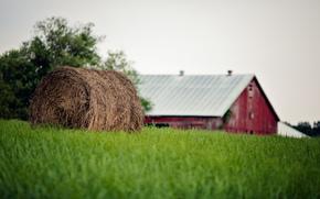 hierba, paca, paja, verano, granja