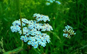 vero, Flores, natureza, Plantas, macro