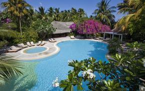 Мальдивы, бунгало, бассейн, шезлонги, пальмы, деревья, природа