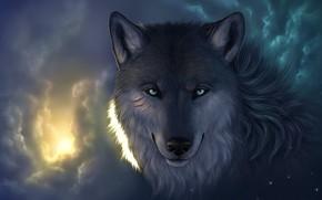loup, nuages, coupes, voir, museau, lumire, Star